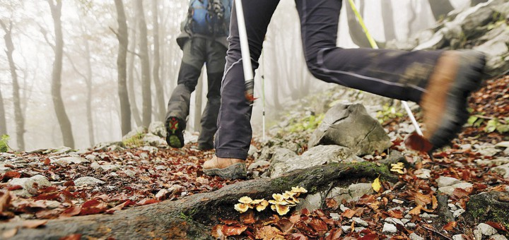 Mushrooms and misty weather in the forest, Risnjak National Park, Gorski Kotar, Croatia.